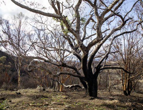 VW Donates to Australian Bushfire Recovery